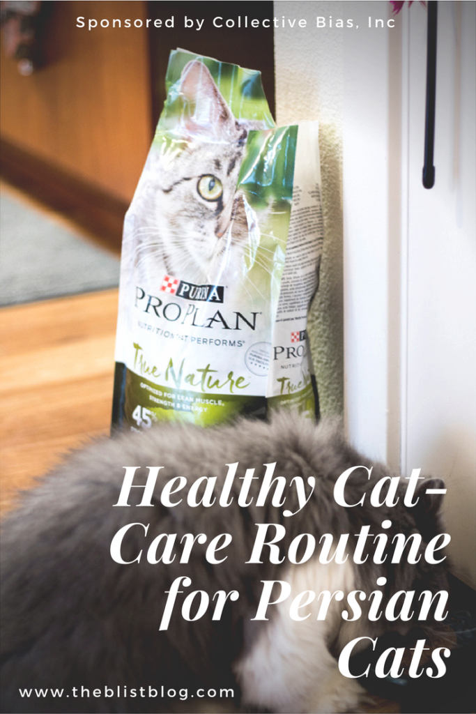 healthy cat-care routine